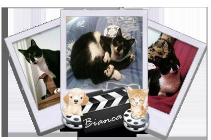 Bianca, chatte à adopter Paris